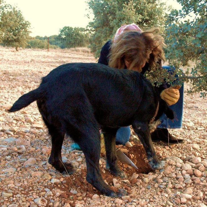 Truffle+Dog.jpg