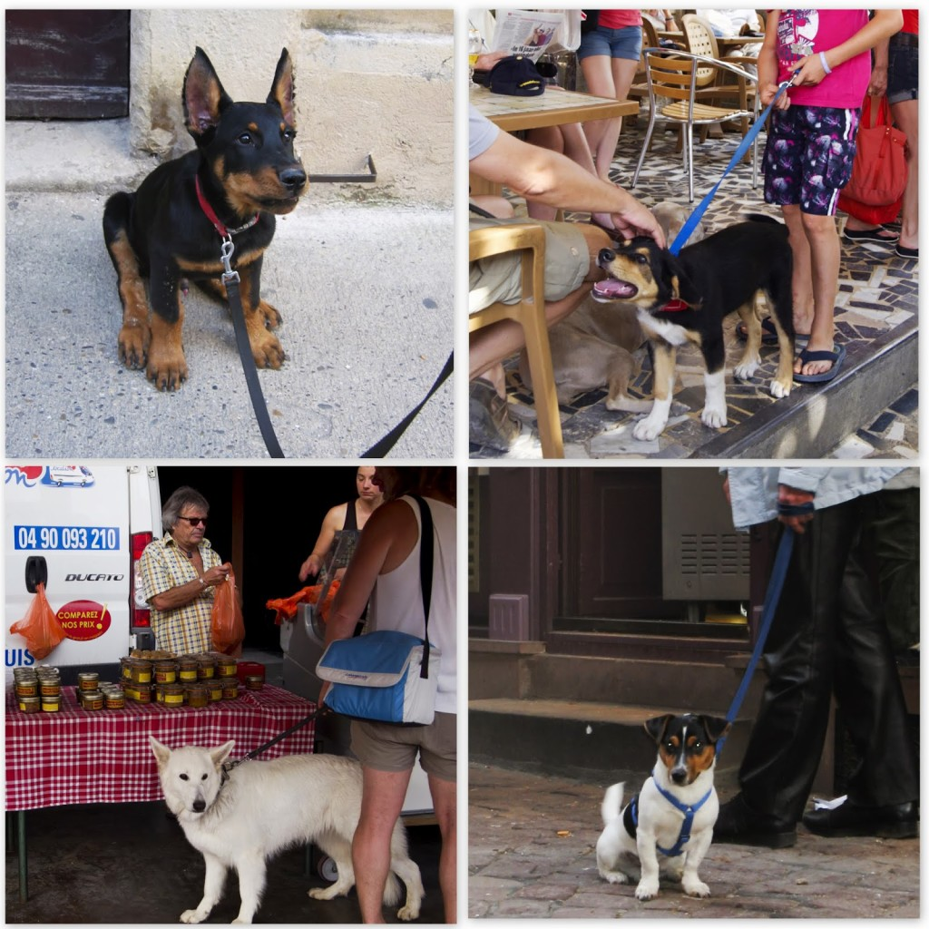 Dogs+in+Provence1.jpg