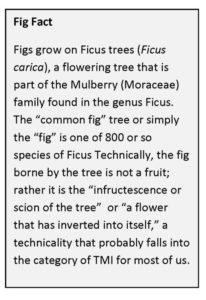 Fig+Fact+1.jpg