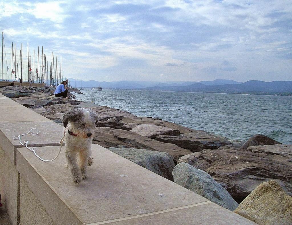 D'Agneau sports a new leash to match the sailing theme of the day. The Gulf of Saint Tropez  Photo by Pamela J. O'Neill