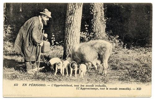 truffle+pigs.jpg