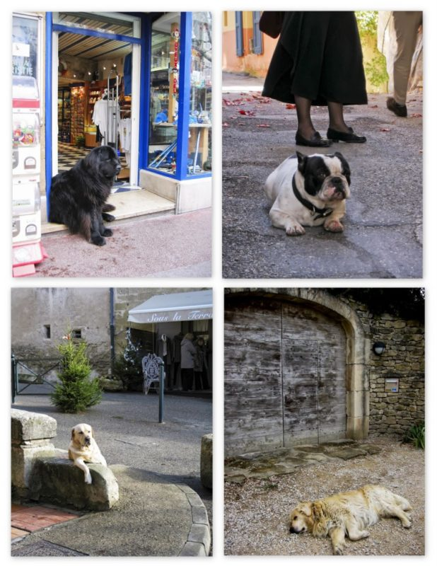 Dogs+in+Provence.jpg