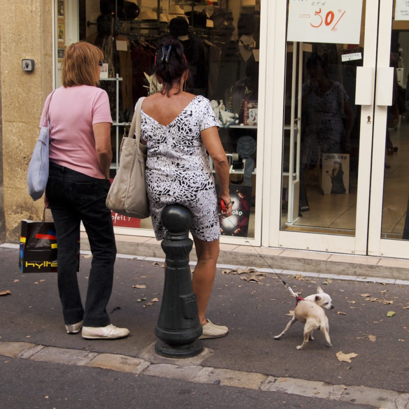 Dogs_in_Provence (1 of 1)-27