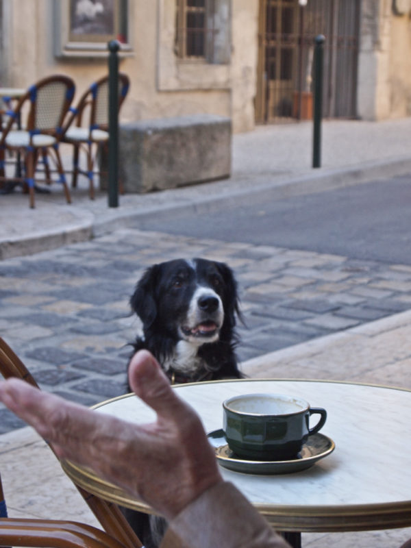 Dogs_in_Provence (1 of 1)-28